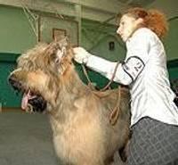 Лиепайские собаки и их хозяева могут гордиться