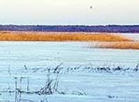 Разрабатывают план охраны природы для Лиепайского озера