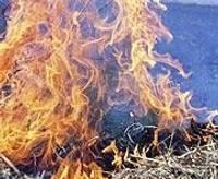 Началась эпидемия поджога травы