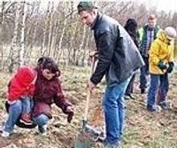 В дни леса Латвию наряжают в белые березовые рощи