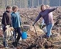 В посадку леса вкладывают деньги Евросоюза