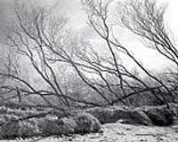 Показывают море, дюны и цепкие корни