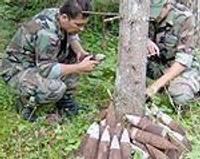 В лесу обнаружены снаряды