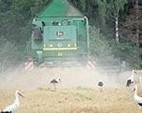 Срочно надо убирать озимые, а комбайны вязнут в поле