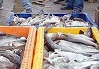 Европа следит за тем, контролируем ли мы рыбный промысел