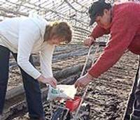 В «Калмес» уже сеют ранние овощи