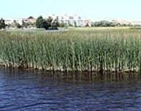 Призывают высказаться о будущем Лиепайского озера