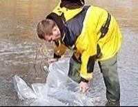 Река Барта вчера стала богаче на миллион мальков налима