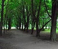 Предлагают высказаться о парке Райниса