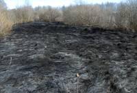 В течение дня два пожара старника
