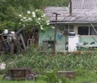 Мелкие воришки одолевают огородников