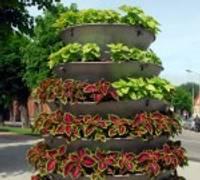 Составлены цветочные пирамиды