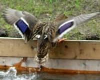 Утратит ли свое название Лебединый пруд?