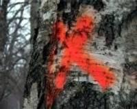 Деревьям зарплату платить не надо