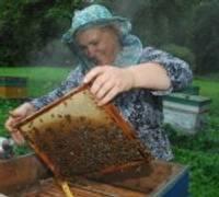 Главное – пчелы, а не мед
