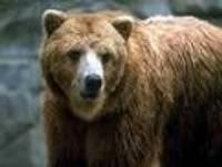 Медведи в Калвене вновь ушли в зимнюю спячку