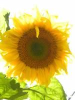 flower=)