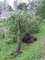 После урагана в Нице