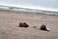 Опрос о пляже