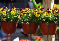 """Яркий и многообразный праздник для садоводов «Весна в цветах"""""""