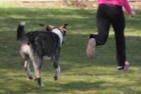 Ограничили террор собак