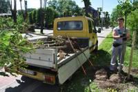 На улице Улиха пересажены деревья