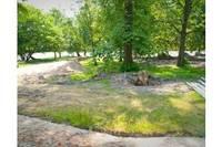 Разрешено спилить поврежденные деревья