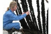 В море хотят обустраивать фермы моллюсков