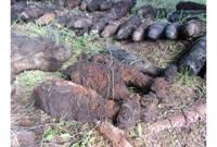 Грибник нашел в лесу два снаряда времен войны
