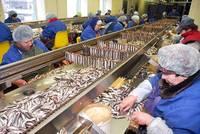 Запрещают экспортировать шпроты в Казахстан