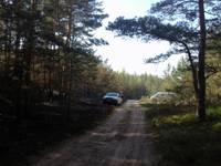 Чтобы не заблудиться в лесу