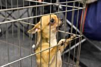 Одобрены штрафы за незарегистрированных собак после 1 июля 2016 года