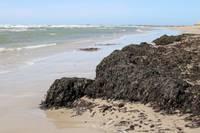 Коричневая масса в местах для купания – водоросли
