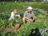 В «Саду успокоения души» собирают урожай