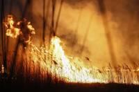 На острове на озере Папес загорелся тростник