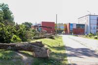 Печалятся о вырубленных деревьях