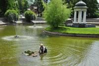 В Лебединый пруд возвращаются водяные лилии