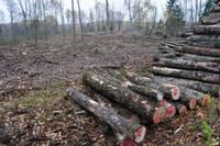 Главным латвийским экспортным товаром была древесина