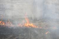 Национальные особенности сжигания старника