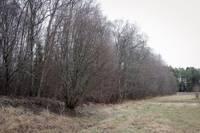 Жители сообщили о подозрительном взрыве в лесу: полиция обнаружила воронку
