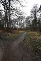 В Военном городке спилят сотни деревьев