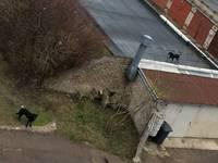 В Эзеркрасте бродят агрессивные собаки