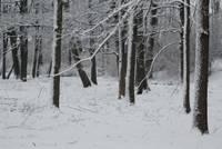 В конце недели мороз местами может достичь -30 градусов