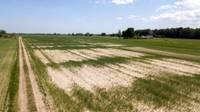 Из-за засухи объявлено стихийное бедствие государственного масштаба