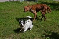 В приют попала истощенная собачка