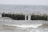 Из-за усиления ветра понижается уровень воды в море