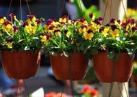 """1 мая на Рожу лаукумс состоится традиционный праздник для садоводов """"Весна в цветах""""."""