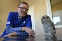Найденный в Лиепае совенок перевезен в зоопарк в Калвене