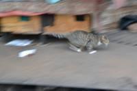Дело о сожжение кошки прекращено; к ответственности никого не привлекут