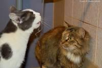 Дуда и Найки ищут дом